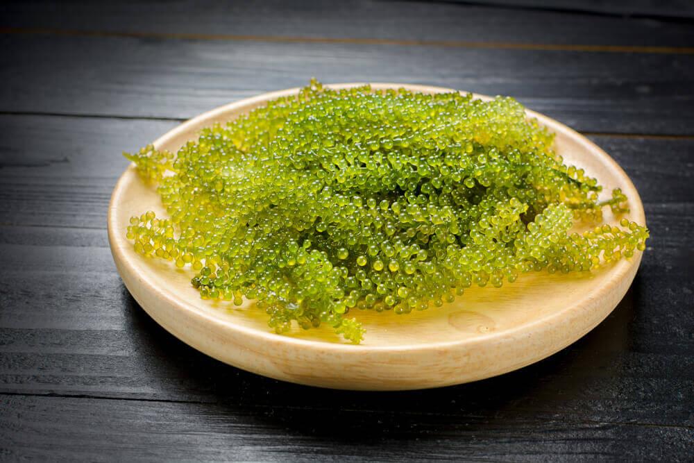 Vegan Caviar, Anggur Laut yang Meremajakan Kulit