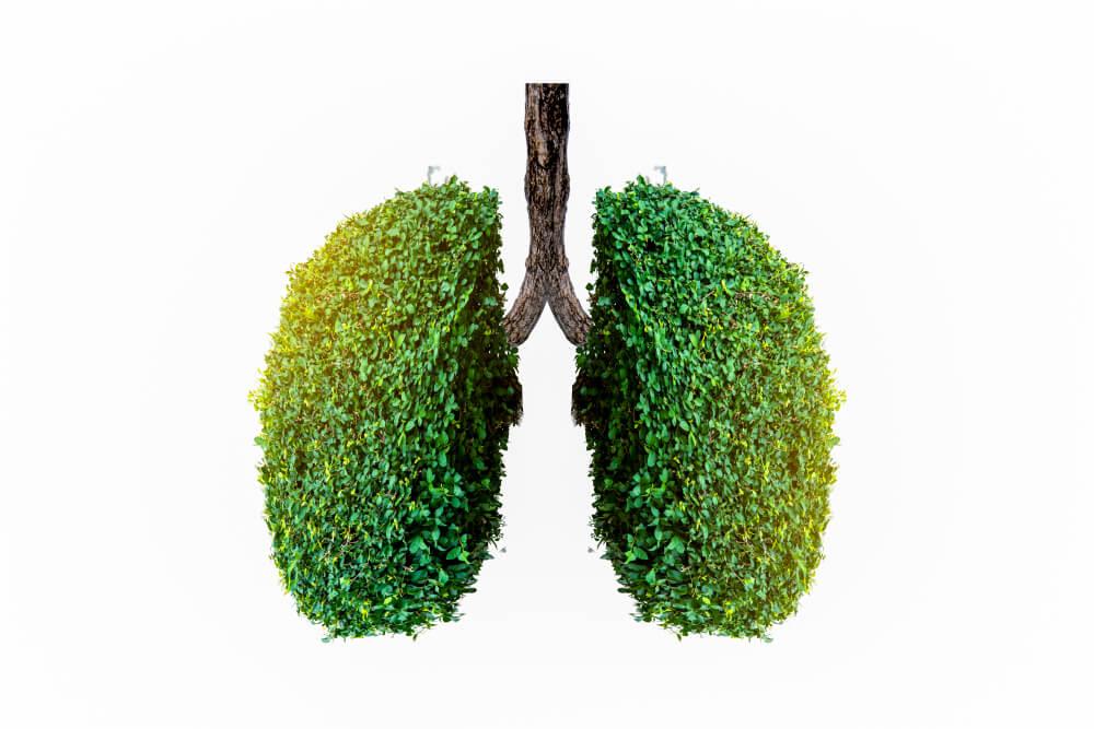 Tip Membersihkan Paru-paru