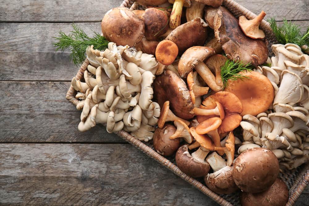 Manfaat Jamur Bagi Kesehatan, Bisa Turunkan Kolesterol
