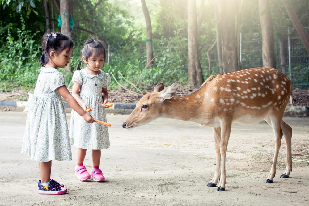 5 Kegiatan Mengenalkan Binatang pada Anak