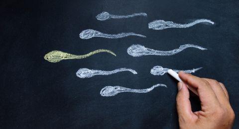 Makanan Pendukung Kualitas Sperma