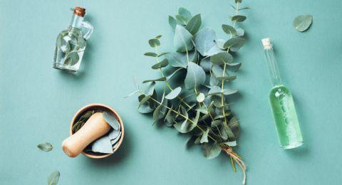Manfaat Minyak Kayu Putih yang Jarang Diketahui, Simak!